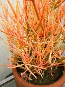 Fluorescent Cactus